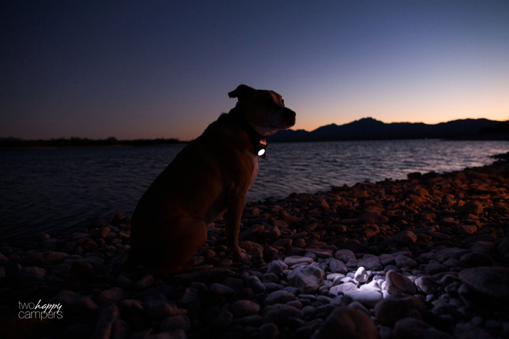 camping solutions for dogs